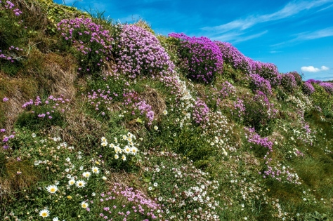 The Coastal Flowers Are Out and More On the Way.....