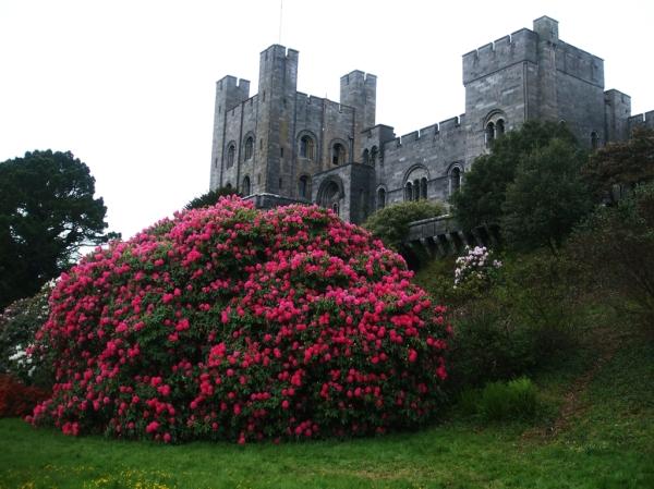 Penryhn Castle 2