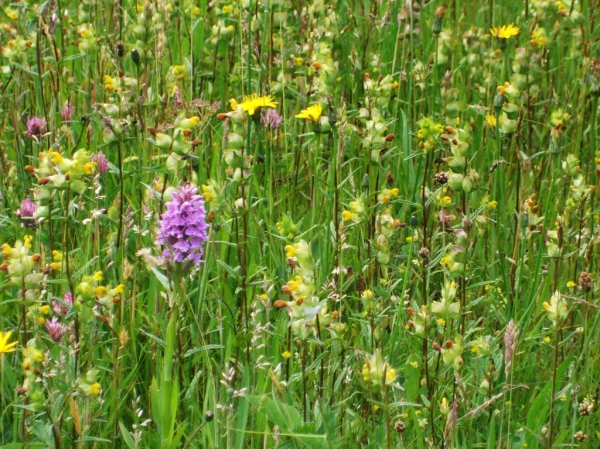 Orchid Meadow, Photo: Mike Howe