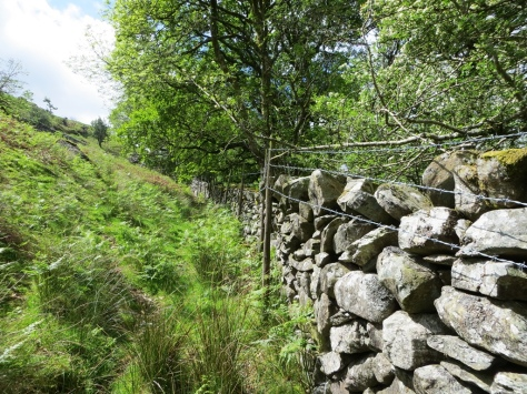 Coed Crafnant goat fence