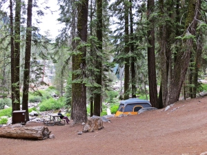 Sequoia camp