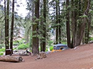 Sequoia camp