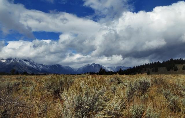 Sage plains, Tetons